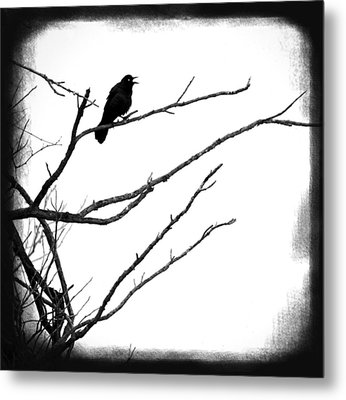 The Raven Metal Print by Penny Hunt