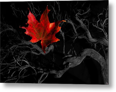 Metal Print featuring the photograph The Red Leaf by Beverly Cash