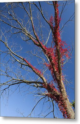 Metal Print featuring the photograph The Red Tree by Nick Mares