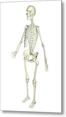 The Skeletal System Metal Print by MedicalRF.com