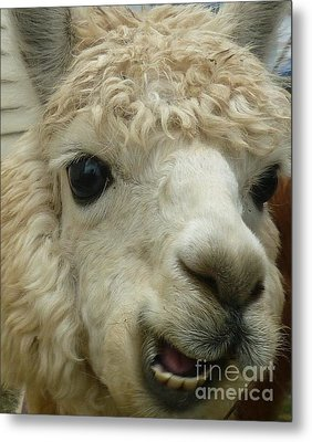 The Smiling Alpaca Metal Print by Therese Alcorn