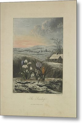 The Snowdrop Metal Print by Robert John Thornton