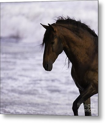 The Stallion And The Ocean Metal Print by Carol Walker