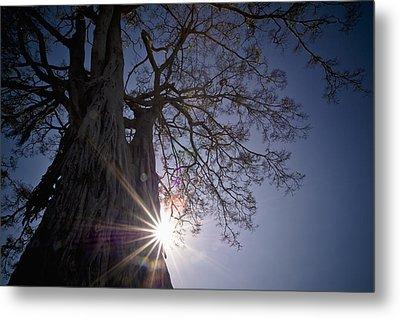 The Sunlight Shines Behind A Tree Trunk Metal Print by David DuChemin