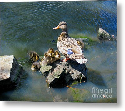 The Swimming Lesson Metal Print by Rory Sagner