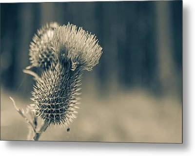 The Thistle Metal Print by Andreas Levi