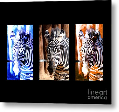 Metal Print featuring the photograph The Three Zebras Black Borders by Rebecca Margraf