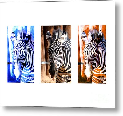 Metal Print featuring the photograph The Three Zebras White Borders by Rebecca Margraf