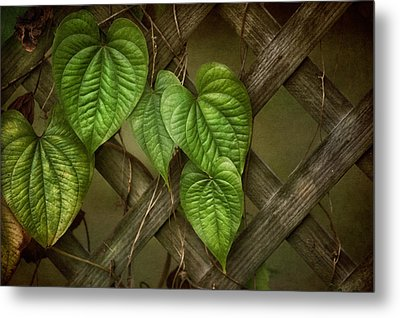 The Trellis Metal Print by Brenda Bryant
