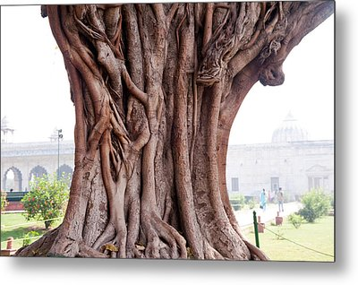 The Twisted And Gnarled Stump And Stem Of A Large Tree Inside The Qutub Minar Compound Metal Print by Ashish Agarwal