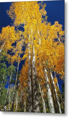 The Two Split Trees Metal Print by Mitch Johanson
