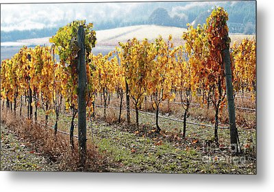 The Vineyard Metal Print by Margaret Hood