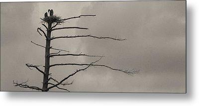 The Vulture Tree Metal Print by Artist Orange