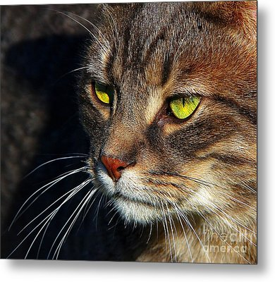 Metal Print featuring the photograph The Watcher by Davandra Cribbie
