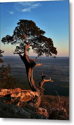 The Weathered Watcher Metal Print by Jeff Rose