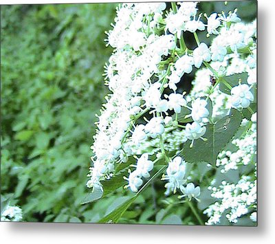 The White Bloom Metal Print by Rachel Snell