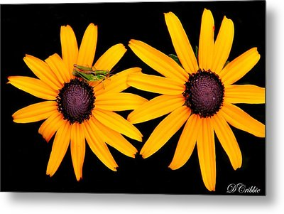 Metal Print featuring the photograph The Yellow Rudbeckia by Davandra Cribbie