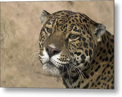Thinking Metal Print by Cheri McEachin