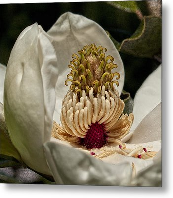 Metal Print featuring the photograph Third Stage by Barbara Middleton