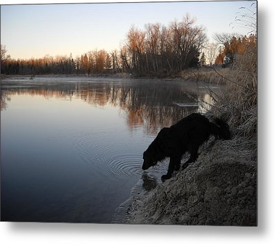 Thirsty In November Metal Print