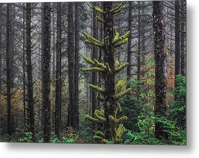 This Is British Columbia No.54f - Misty Mystical Moss Forest IIi Metal Print by Paul W Sharpe Aka Wizard of Wonders