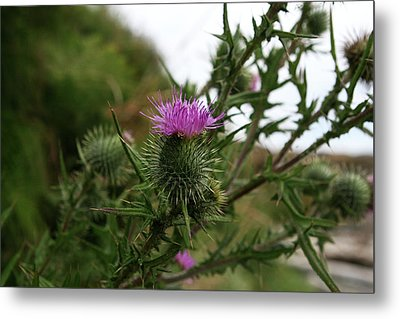 Metal Print featuring the photograph Thistle Bloom by Lorraine Devon Wilke