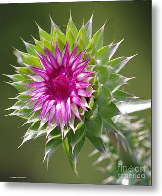 Thistle  Metal Print by Tannis  Baldwin