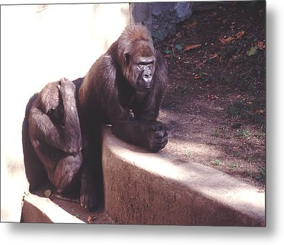 Metal Print featuring the photograph Thoughtful Gorilla With Child by Tom Wurl