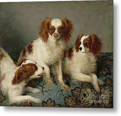 Three Cavalier King Charles Spaniels On A Rug Metal Print by English School