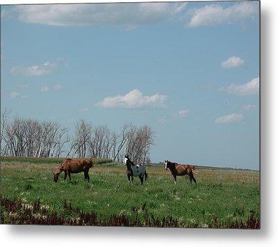 Three Horse Ranch Metal Print by Brian  Maloney