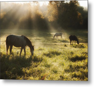 Three Horse Sunrise Metal Print by Ron  McGinnis