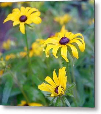 Three Of A Kind Metal Print by Cathie Tyler