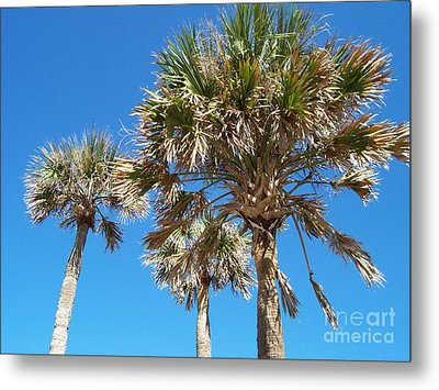 Three Palms Metal Print by Jeanne Forsythe