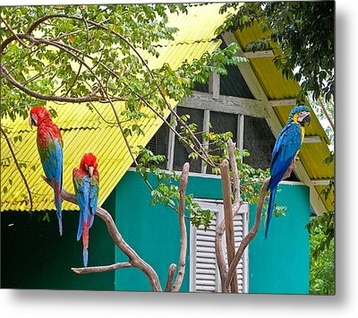 Metal Print featuring the photograph Three Parrots by Ann Murphy