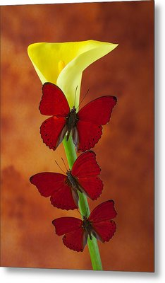 Three Red Butterflies On Calla Lily Metal Print by Garry Gay