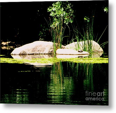 Three Rocks And A Turtle Metal Print by Maria Scarfone