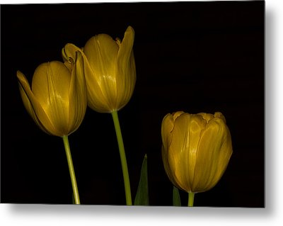 Metal Print featuring the photograph Three Tulips by Ed Gleichman