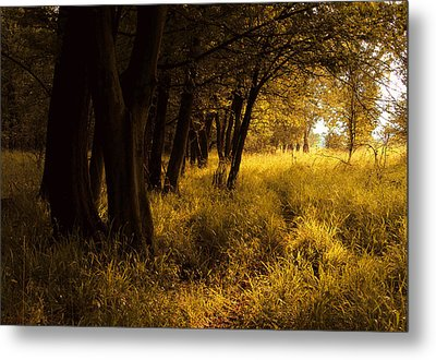 Through Enchanted Forest Metal Print by Bogdan M Nicolae