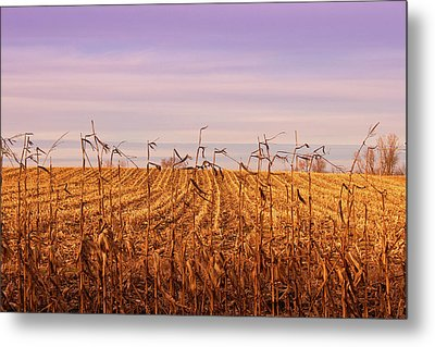 Metal Print featuring the photograph Through The Cornfield by Rachel Cohen
