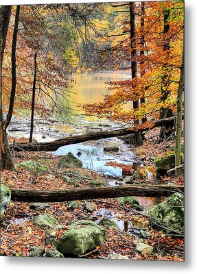 Through The Trees Metal Print by JC Findley