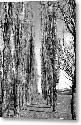 Through The Trees Metal Print by Jonathan Lagace