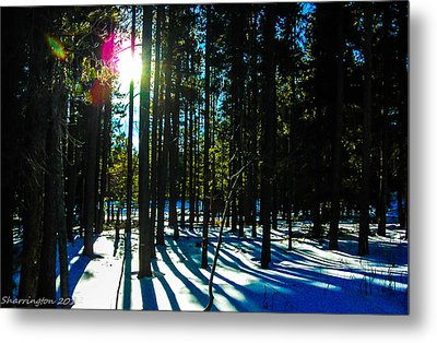 Metal Print featuring the photograph Through The Trees by Shannon Harrington