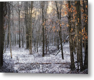 Metal Print featuring the photograph Through The Woods Into The Sunset by Yelena Rozov