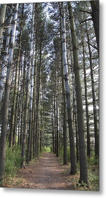 Metal Print featuring the photograph Through The Woods by Jeannette Hunt