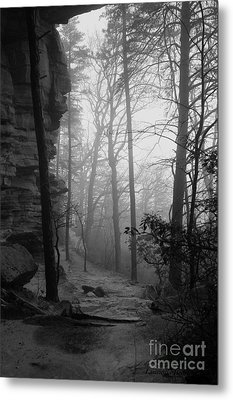 Through These Woods A Path Was Made Metal Print by Laurinda Bowling