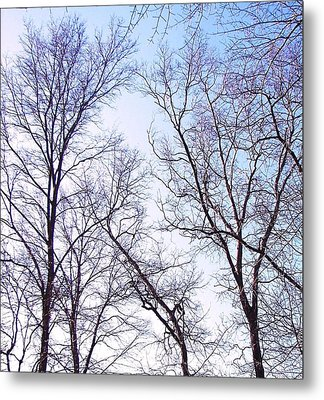 Metal Print featuring the photograph Through To Heaven by Pamela Hyde Wilson