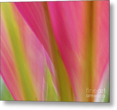 Ti Leaves Metal Print by Ranjini Kandasamy