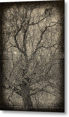Tickle Of Branches  Metal Print by Jerry Cordeiro