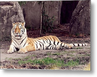 Metal Print featuring the photograph Tiger 1 by Denise Moore