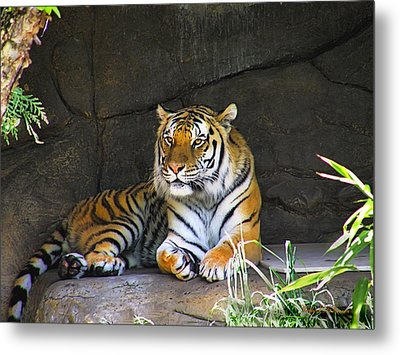 Tiger Life Metal Print by Wendy McKennon